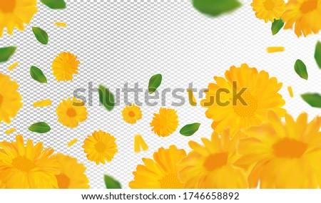 3d realistic marigold with