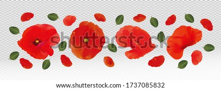 3d realistic red poppies