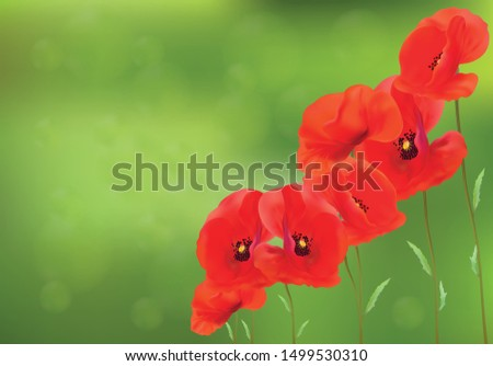 3d realistic red poppies with