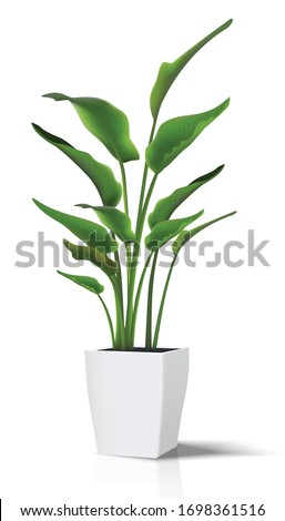 3d realistic vector floor house green plant. Isolated on white illustration icon in white pot.. Stock foto ©