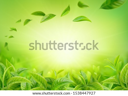 3d realistic vector horizontal banner, nature, tea plantation, green tea garden background with flying leaves  for your design, ads