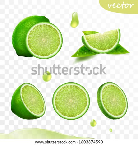 3D realistic vector set of elements, whole lime, sliced lime, drop lime oil, leaves
