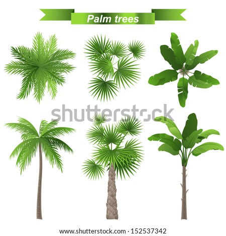 3 different palm trees   top