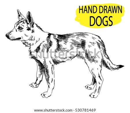 dog stands drawing by hand in