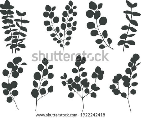 Eucalyptus branches collection.    greenery vector illustration. Large Eucalyptus  silhouette set isolated on white background.
