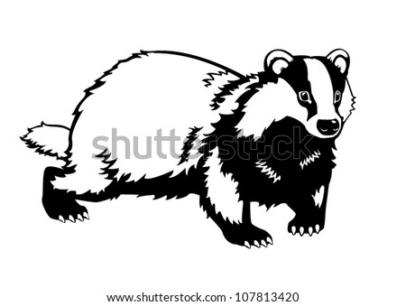 european badger  black and