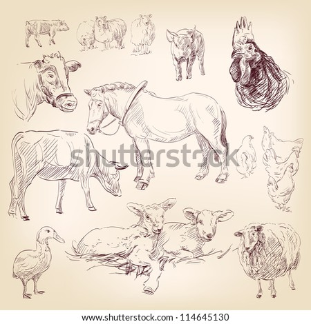 farm collection  animal hand drawn  vector illustration  isolated