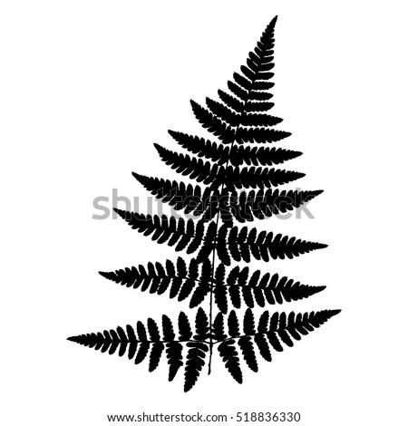 fern 18 vector silhouette