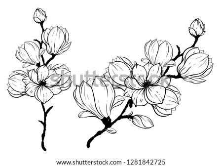 Flowering branch of cherry blossoms, magnolias. Drawn vector illustration, sketch. Set of floral elements, wedding invitation, design #1281842725