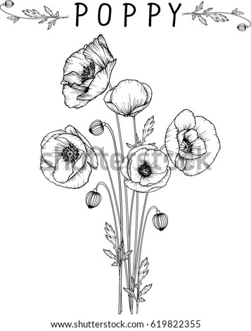 flowers drawing poppy flower