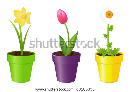 3 Flowers In Pots, Tulip, Narcissus And Camomile, Isolated On White Background, Vector Illustration