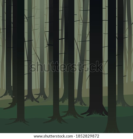 foggy forest early in the