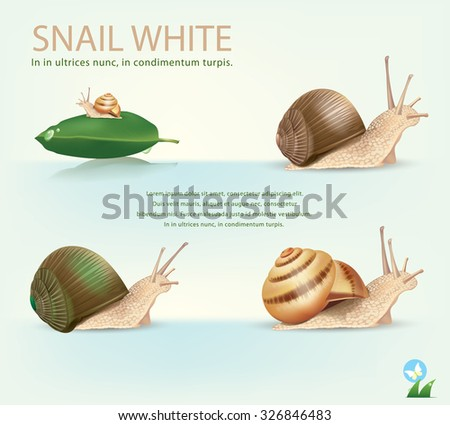 garden snail in front of white