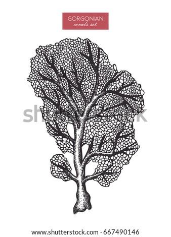 hand drawn gorgonian reef