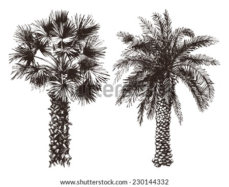 2 hand drawn palm trees in