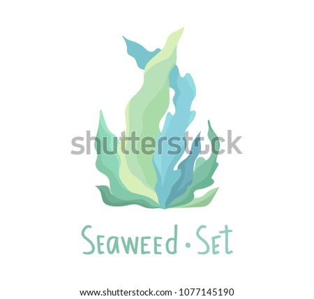 Seaweed vector set - Download Free Vector Art, Stock Graphics & Images