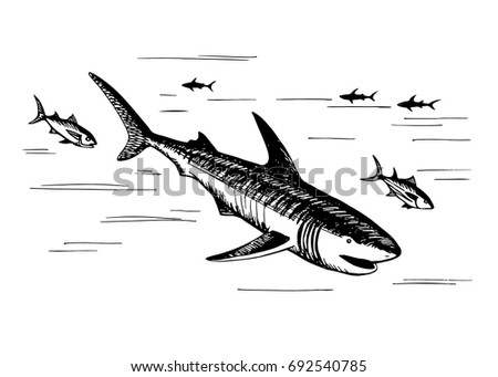 Hand drawn vector sketch floating shark. Marine fish predators. Fauna of the world ocean.