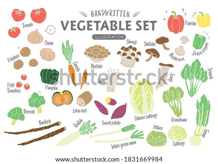 Handwritten rough vegetable illustration set