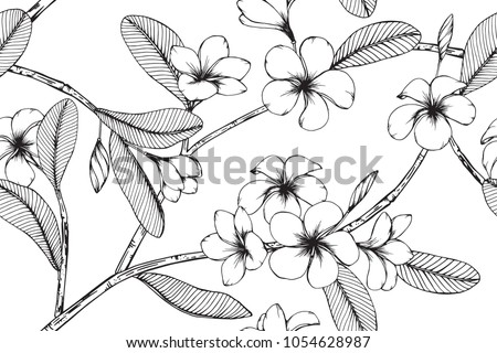 Hawaiian pattern seamless background with Plumeria flower and leaf  drawing illustration.