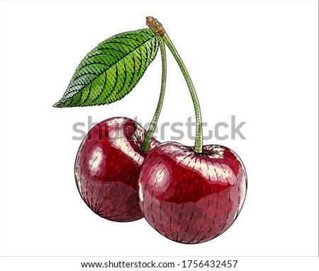 herry  cherry tree vector