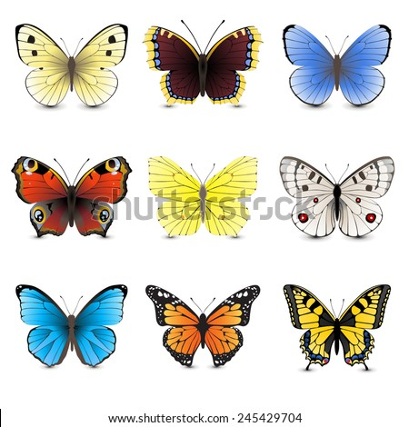 9 highly detailed butterfly