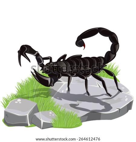 illustrationscorpion