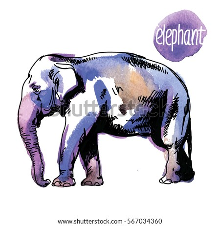 indian elephant drawing by