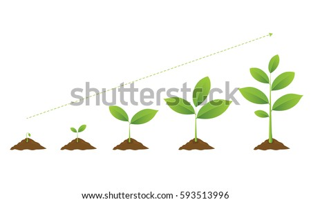 Infographic of planting tree. Seedling gardening plant. Seeds sprout in ground. Sprouts, plants, trees growing icons. Seedling agriculture. Vector illustration isolated on white background.