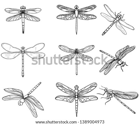 insects dragonflies  set