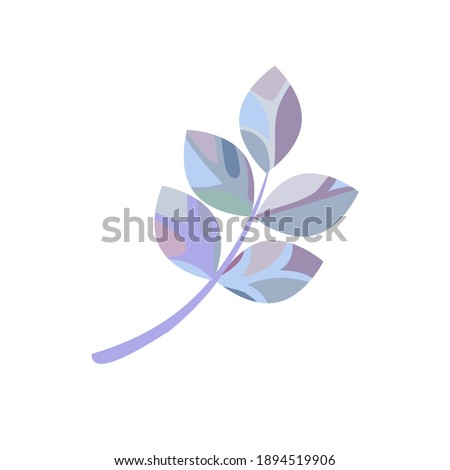 isolated frosty blue leaved