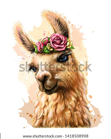 Lama/Alpaca. Sticker on the wall in the form of a color, artistic portrait of a lama on a white background with splashes of watercolor.