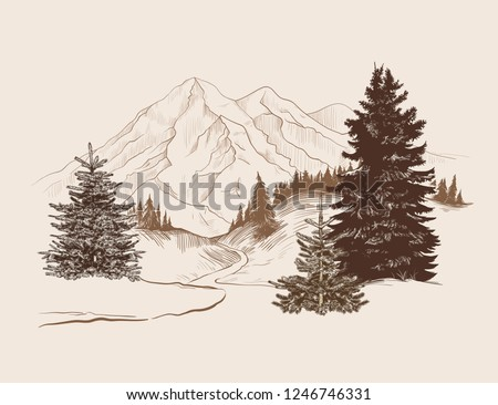 landscape with a road  spruces