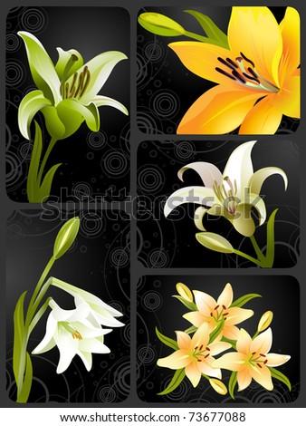 lily set, vector grunge floral background