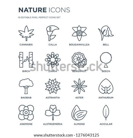 16 linear nature icons such as Cannabis, Calla, Alstroemeria, Anemone, Anthurium, Acicular, Birch, Baobab, Bergamot modern with thin stroke, vector illustration, eps10, trendy line icon set.