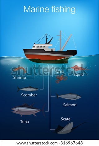 marine fishing infographic