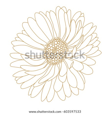 Monochrome, golden aster flower isolated on a white background. Vector.