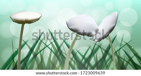 mushroom growing up in meadow