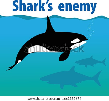 orca whale the only enemy of