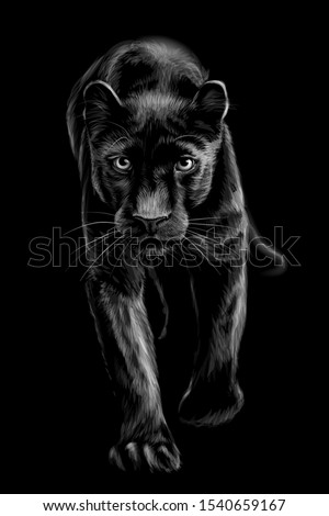 panther artistic  sketchy
