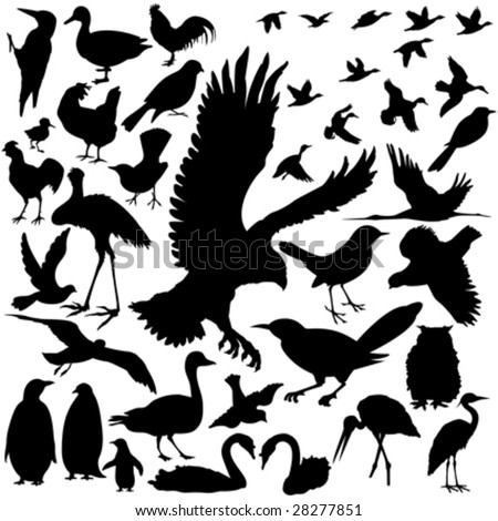 39 pieces of detailed vectoral bird silhouettes. - stock vector