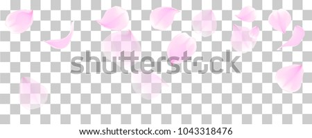 Pink petals  of cherry blossom or  sakura flowers  for background ,card with copy space , vector,illustration , image.
