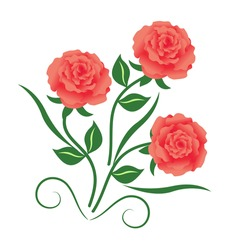 3 pink roses with leaf and swooshes. Vector illustration