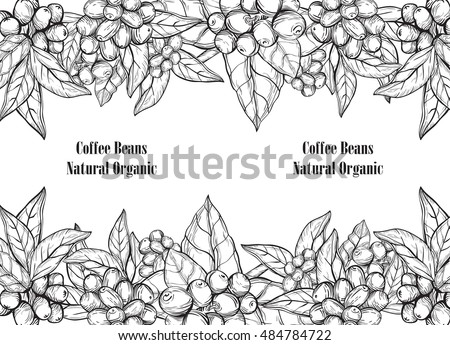 plant with coffee leaf berry
