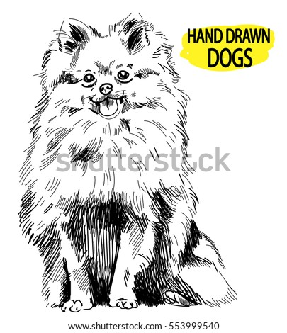 pomeranian drawing by hand in