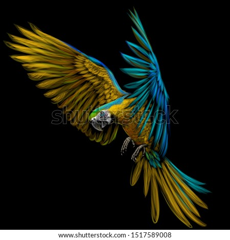 portrait of a macaw parrot in