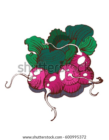 radishes,handmade graphics, salad
