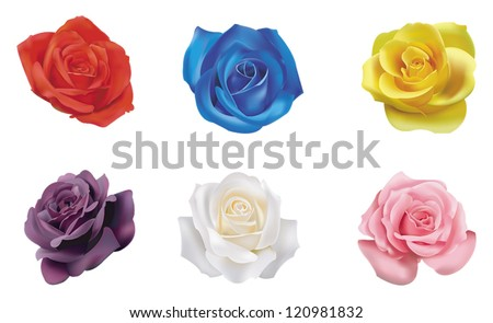 6 realistic color roses flower
