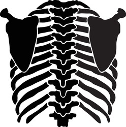 Rib cage icon Simple illustration of rib cage vector icon for web line art anatomically correct human ribcage black vector illustration. Print design for t-shirt or Halloween costume
