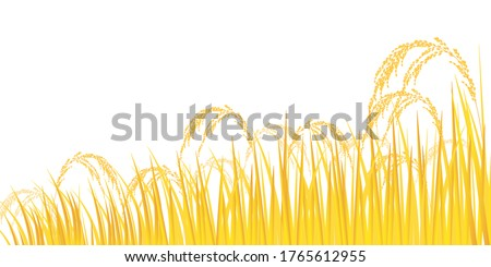 rice plant agriculture