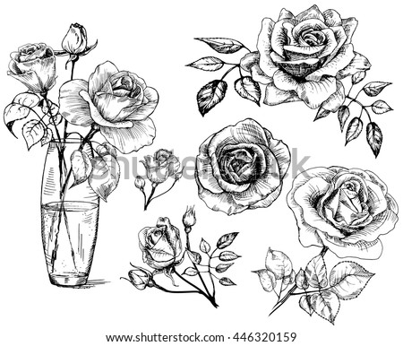 roses hand drawn flower set